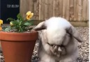 Bioguia - Esta flor huele muy rico Facebook