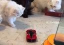 Birbirinden eğlenceli videolar için Petsbooku takip et