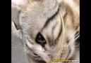 Bir Damla Gözyaşıyla İçleri Sızlatan Kedicik