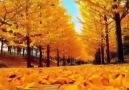 Bir Hayal Alemi - Sonbahar sanattır diğerleri mevsim..!...
