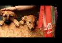 Birikimevim - Hayvanları Koruma Günü Facebook