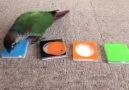 Birisine Kuş beyinli derken bir kez daha düşünün! )