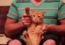 Bir kedi Dubstep ile nasıl mındar edilir ?