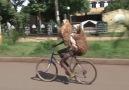 Bisiklete binen koyunlar
