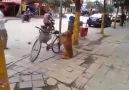 Bisiklet Koruması Köpek