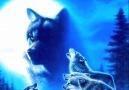 Blue (Sky-) Wolf - Gök-Börü - Kok-bore