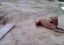 Boğulma Numarası Yapan Adam ve Köpeğinin Yaptığı!