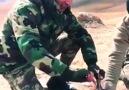 Bordo Bereliler - Suriye&selamın aleyküm durumlar...