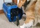 Break - Good girl still thinks she&a puppy Facebook