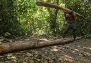 Building The Most Beautiful Survival House VillaCredit Tube Unique Wilderness