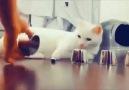 Bu kedi kesinlikle benden zeki