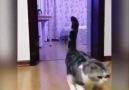 bu kediler kadar masum bi varlık daha görmedim