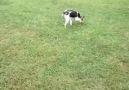 Bu köpekde bir gariplik var