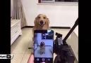 Bu köpek, kamera görünce gülümsemeye başlıyor!