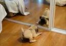 Bu köpekler bi manyak :))))