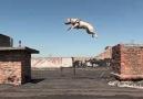 Bu Köpekler Olağan Üstü