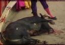 Bullfighting Cruelty in 60 Seconds