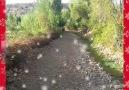 Bulut Aras - Geçen sene genç bir kardeşimiz bir kaza...