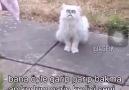 Bu nasıl kedi...