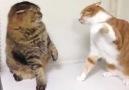 Bu nasıl kedi kavgası böyle..