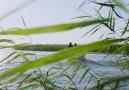 Bursa Uluabat Gölü