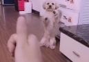 Bu sevimli köpek ileride zengin olacak.... - Mehmet Faik Meral