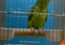 Bütün Sureleri Okuyan Papağan