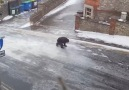 Buz tutmuş yolda yürümeye çalışmak her zaman komik olmuştur