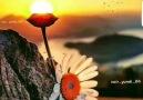 Çalı & Çırpı - Kır Papatyası