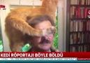 Canlı yayına kedi müdahalesi