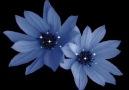ÇarşıßaşıRapTime -ÇiçeĞim Demoo|2010©™|