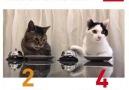 Catlerden gelen bir karar vardır