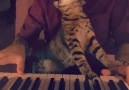 Cat Loves Music LIKE & SHARE Cute KittyClick link for more