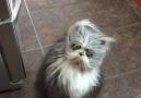 Cat Or Werewolf