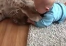 Cat Playing With Baby