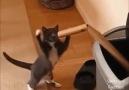 :) Cats 5