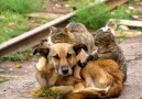 Cats and dogs friends