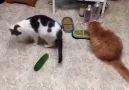 Cats & Cucumbers...