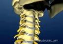 Cervical spine and Intervertebral Disc anatomy