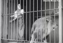 Charli Chapline Fans - Ahahahaha Charlie Chaplin So Funny Video D Facebook