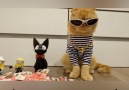 Check out this compilation of curious kitties and frisky felines!