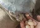 Chelito - Turtle Feeding Facebook