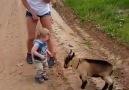 Children and animals D