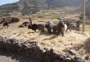 Chilometri e chilometri in Etiopia e... - Salvatore Ceccarelli