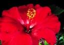 Çiçeğin Kenti Bayındır'a davetlisiniz
