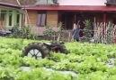 Çiftçilik Teknolojiyle buluşursa.