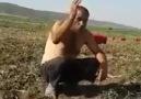 çiftçinin küfürlü İSYANI