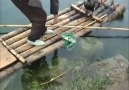 Çin Guilin Bölgesinde Balık Böyle Tutuluyor
