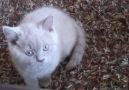 Çirkin Kediler - yaramaz kedi ve sabırlı köpek