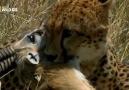 Çita & Ceylan